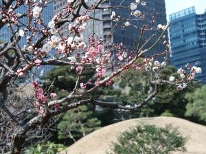 旧芝離宮恩賜庭園の紅白の梅